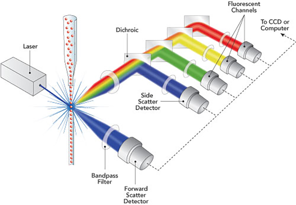 Flow Cytometry Graphic